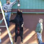 BEAR HUNTING 2010