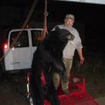 BILL & HIS BEAR