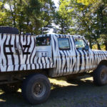 bear-or-zebra-hunting